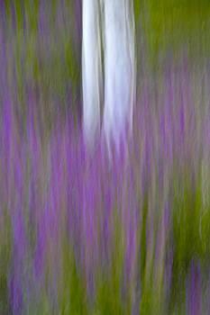 Aspen in the Summer Garden by Nancy Myer