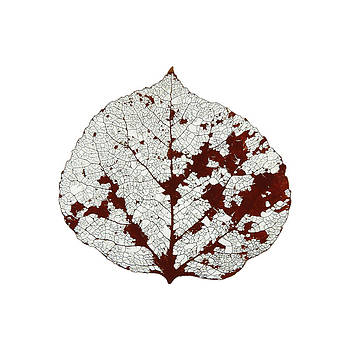 Aspen Leaf Skeleton 2 by Agustin Goba