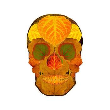 Aspen Leaf Skull 2 by Agustin Goba