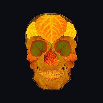 Aspen Leaf Skull 2 Black by Agustin Goba