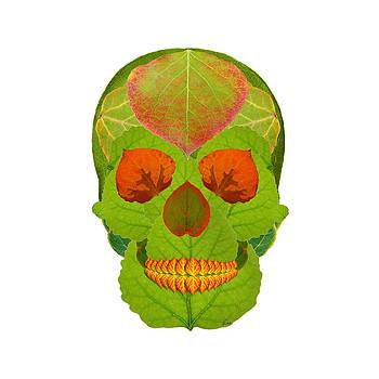 Aspen Leaf Skull 5 by Agustin Goba