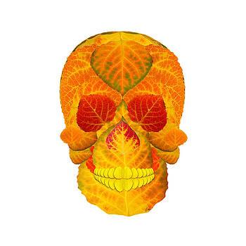 Aspen Leaf Skull 6 by Agustin Goba