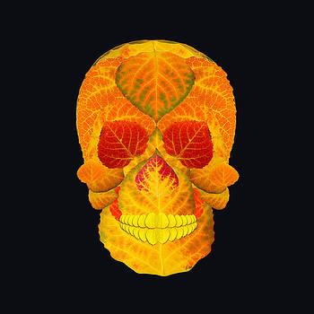 Aspen Leaf Skull 6 Black by Agustin Goba