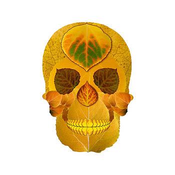 Aspen Leaf Skull 8 by Agustin Goba