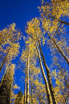 Aspen Sky by Kim Baker
