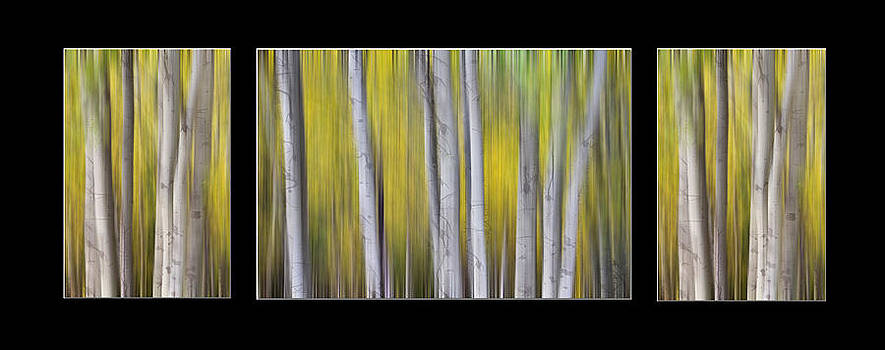 James BO  Insogna - Aspen Splendor Dreaming Triptych Collage