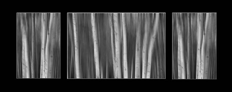 James BO  Insogna - Aspen Splendor Dreaming Triptych in Black and White