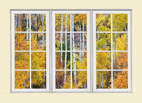 James BO  Insogna - Aspen Tree Magic Cream Picture Window View 3