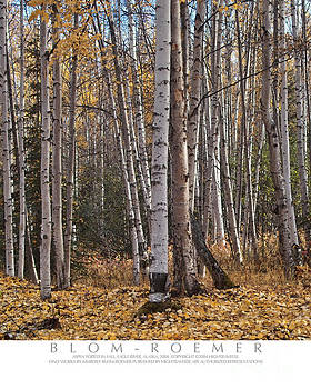 Aspen Woods In Fall by Kimberly Blom-Roemer