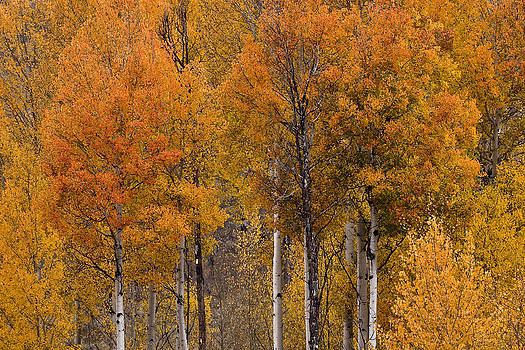 Wes and Dotty Weber - Aspens Ablaze