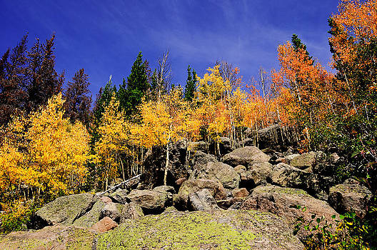 Aspens in Fall by Don and Bonnie Fink