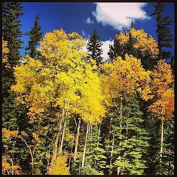Aspens by Paula Manning-Lewis