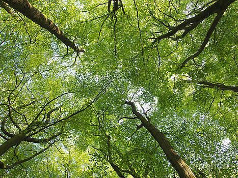Aspiring Trees by Elizabeth Debenham
