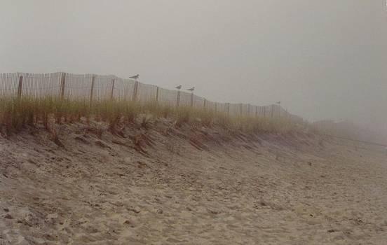 Assateague Dunes by Joann Renner