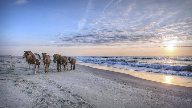 Assateague Morning by Michael Donahue