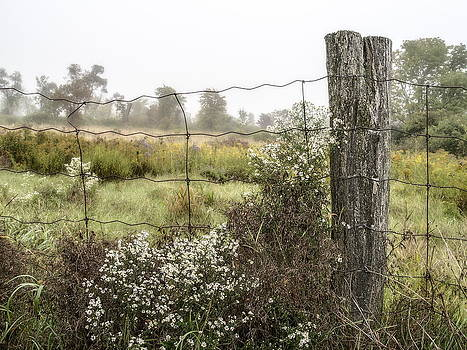 Asters and Fencepost by Alan Norsworthy
