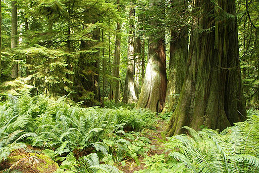 Marilyn Wilson - At Cathedral Grove