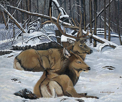AT REST - Elk by Patricia Mansell