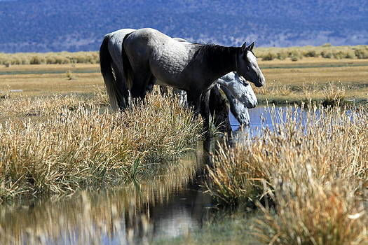 At the Water Hole by Ron  Romanosky