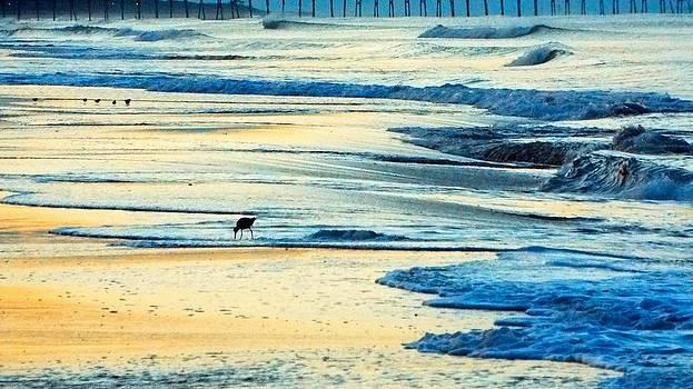 Atlantic Beach Dawn Surf by Cindy Croal