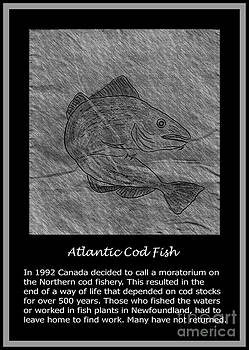 Barbara Griffin - Atlantic Cod Fish Sketch