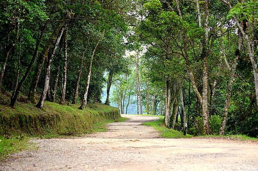 Paulo Zerbato - Atlantic Forest