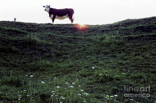 Andre Paquin - Atom Heart Mother