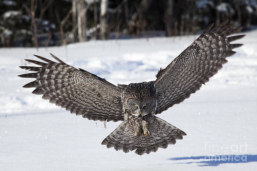 Atterrissage - Landing by Nicole  Cloutier Photographie Evolution Photography