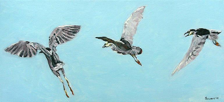 Aukuu in Flight by Sarah Soward