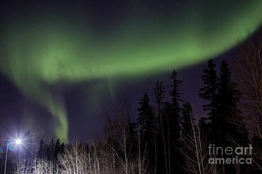 Alanna DPhoto - Aurora Spotlight