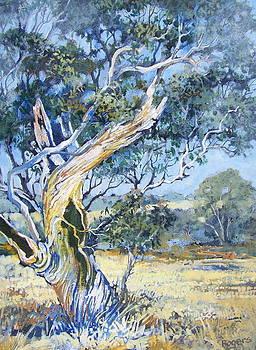 Aussie Battler by Richard Rogers