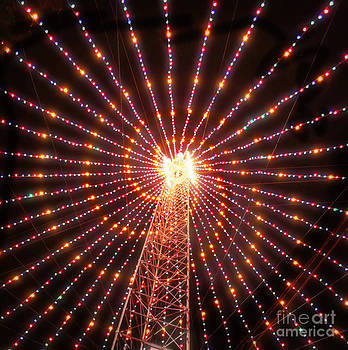 Svetlana Novikova - Austin Texas Trail of Lights