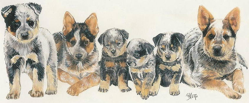 Barbara Keith - Australian Cattle Dog Puppies