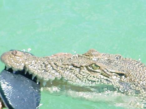 Australian Outback Crocodile by Lynette Boreham