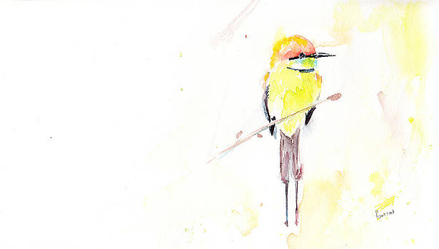 Australian Rainbow Bee-eater by Rachel Dutton