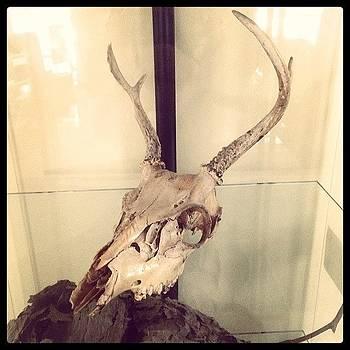 Authentic Demon Skull. #skull #demon by Craig Kempf