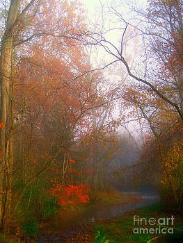 Scott B Bennett - Autum Stream and Mist
