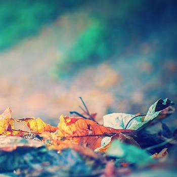 Autumn 3 by Patrick Horgan
