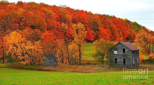 Terri Gostola - Autumn Abandoned