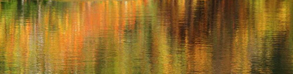 Autumn Abstract 1 by Matthew Grice