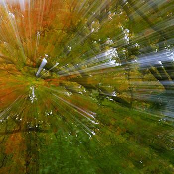 Gary Hall - Autumn Abstract