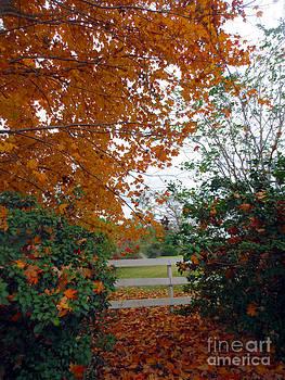 Autumn Afternoon in Carolina by Lisa Jones