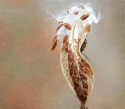 Fraida Gutovich - Autumn Arrival 3