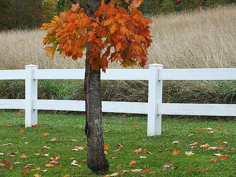 Autumn Arrives by Gene Cyr
