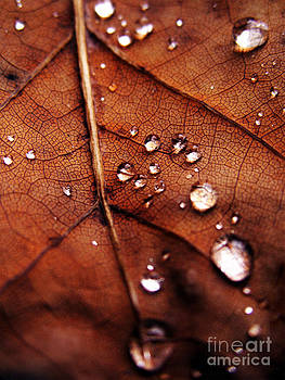 Autumn by Ashley Richardson