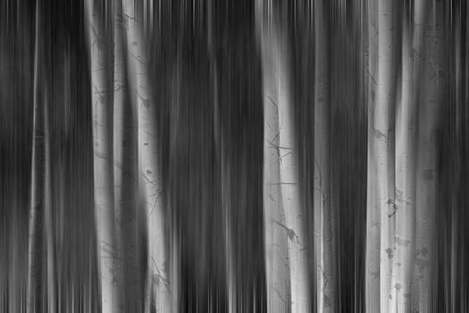 James BO  Insogna - Autumn Aspen Trees Dreaming BW
