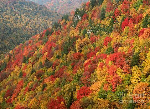 Autumn at Blackwater Falls by Doris Dumrauf