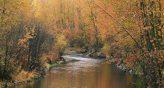 Scott Wheeler - Autumn at Lolo Creek