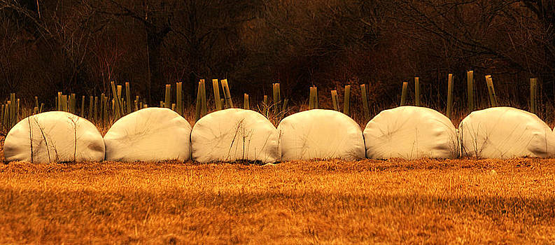 Mary Frances - Autumn Bales