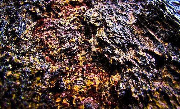 Autumn Bark by Eva Kondzialkiewicz